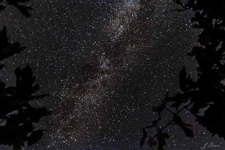 11. Vía Láctea entre cepas