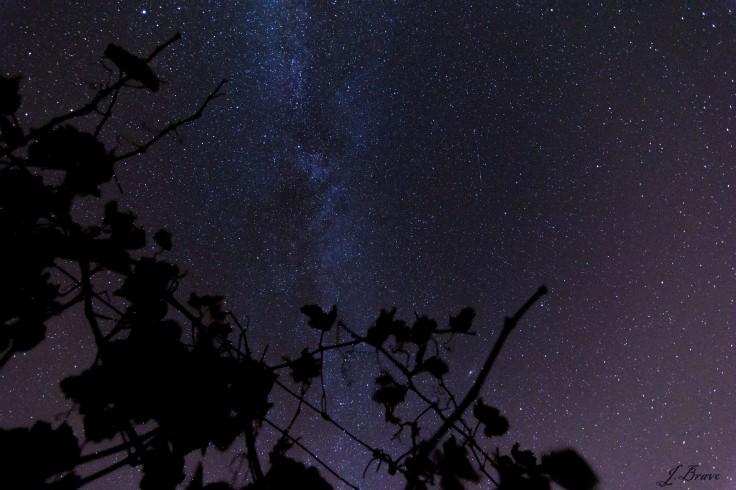 13. Vía Láctea en emparrado